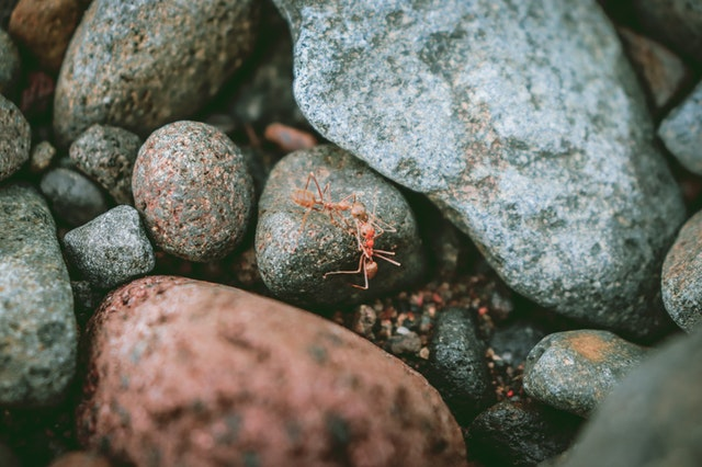 Look at the fantastic tips that protect your yard from dangerous ant